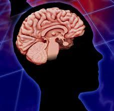 http://www.farmaconsejos.com/wp-content/uploads/2013/12/conmoción-cerebral.jpeg